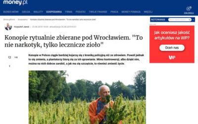 O opłacalności uprawy konopi w Money.pl