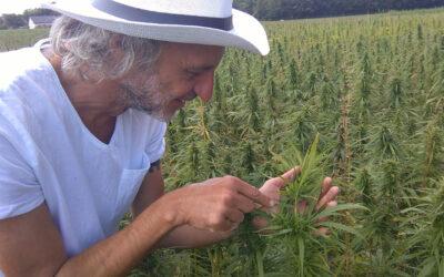 Czy marihuana jest z konopi? Światowy Dzień Marihuany